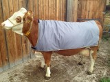 Thermodecke für Kühe