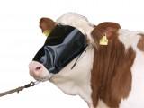 Kuhhalfter mit Viehblende und Kinnkette