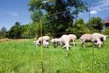 Easy Net 105 cm für Schafe