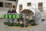 Großraumkälberhütte CalfHouse Premium XL inkl. Umzäunung